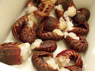 Lobsters 002
